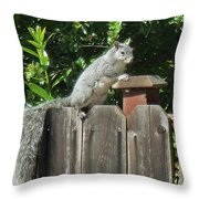 D-a0071-e-dc Gray Squirrel On Our Fence Throw Pillow