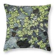 D07343-dc Lichen On Rock Throw Pillow