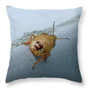 D2b6336-dc Colorful Insect On Sonoma Mountain Throw Pillow
