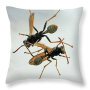 D2b6337 Wasps On Sonoma Mountain Throw Pillow