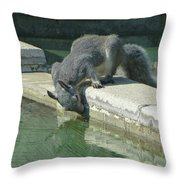 D2b6341-dc Gray Squirrel Drinking From The Pool Throw Pillow