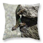D7b6335 Western Fence Lizard, Male, Sonoma Mountain, Ca Throw Pillow