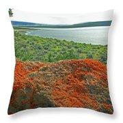 Da5869 Lichen Covered Rock Throw Pillow