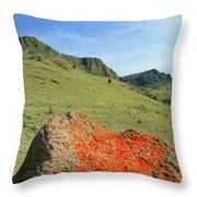 Da5872 Lichen Covered Rock Below Abert Rim Throw Pillow