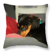 Dachshund Dog, Pug Dog, Good, Time, Bed, Sleeping, Relaxing Time Throw Pillow