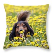 Dachshund On A Meadow In Bloom Throw Pillow