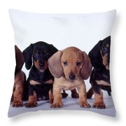 Dachshund Puppies  Throw Pillow by Carolyn McKeone and Photo Researchers
