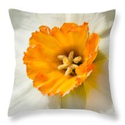 Daffodil Narcissus Flower Throw Pillow