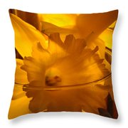 Daffodiil Flowers Evening Glow 9 Contemporary Modern Art Print Giclee Throw Pillow