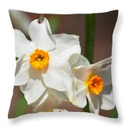 Daffodil Dazzle Throw Pillow