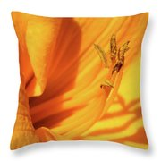 Daffodil - Peeping Tom 05 Throw Pillow