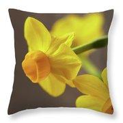 Daffodil Sunrise Throw Pillow