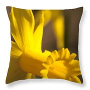Daffodil Yellow Throw Pillow