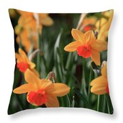 Daffodils Throw Pillow by Tracy Hall