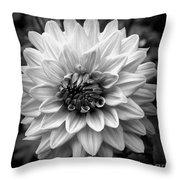Dahlia Art Throw Pillow by Jeni Gray