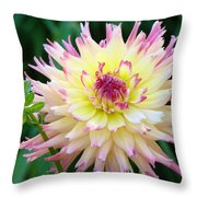 Dahlia Floral Pink Yellow Flower Garden Baslee Troutman Throw Pillow