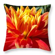 Dahlia Florals Orange Dahlia Flower Art Prints Canvas Throw Pillow