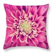 Dahlia Flower Petals Pattern Close-up Throw Pillow