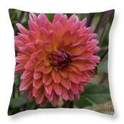 Dahlia In Bloom 19 Throw Pillow