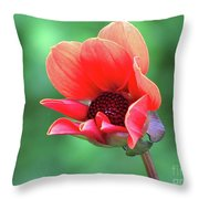 Dahlia On The Verge Throw Pillow
