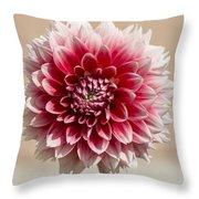 Dahlia- Pink And White Throw Pillow