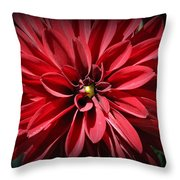Dahlia Radiant In Red Throw Pillow