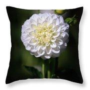Dahlia White Flowers II Throw Pillow