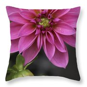 Dahlia With Dew In Pink Throw Pillow
