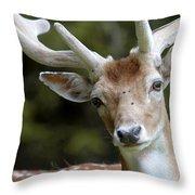 Daim Haute Savoie Throw Pillow