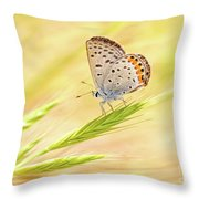 Dainty Butterfly  Throw Pillow