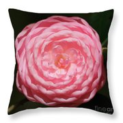 Dainty Pink Camellia Throw Pillow