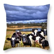 Dairy Heifer Groupies Future Chick-fil-a Starrs Throw Pillow