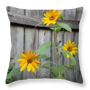 Daisies On The Fence Throw Pillow