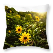Daisies Tangled Sunrise Delray Beach Florida Throw Pillow