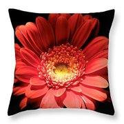 Daisy 03 Throw Pillow