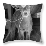 Daisy, Black And White Throw Pillow