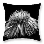 Daisy Flea Bane 0619c Throw Pillow