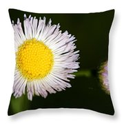 Daisy Fleabane 2 Throw Pillow