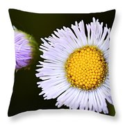 Daisy Fleabane 3 Throw Pillow
