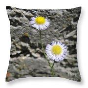 Daisy Fleabane Flowers Throw Pillow