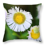 Daisy Fleabane Throw Pillow