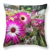 Daisy Flower In Jeju Throw Pillow