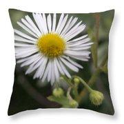Daisy In White Throw Pillow