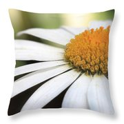 Daisy Petals Throw Pillow