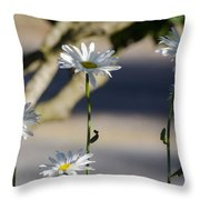 Daisy Soldiers Throw Pillow