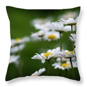 Daisy Summer Sunshine Throw Pillow