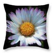 Daisy Under Sun Throw Pillow