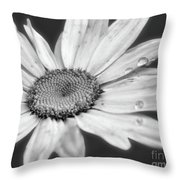 Daisy With Raindrops In Black And White Throw Pillow