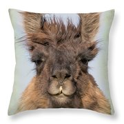 Dali Llama Throw Pillow