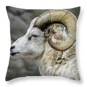 Dall Sheep Throw Pillow